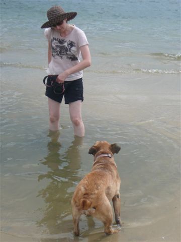 You've got to be kidding!  A dog could drown in all that water!